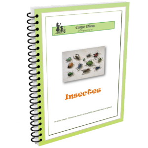 Lapbook Insectes